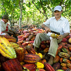 We use organic and sustainable cocoa beans from a carefully elected and certified small cooperative located in Peru.